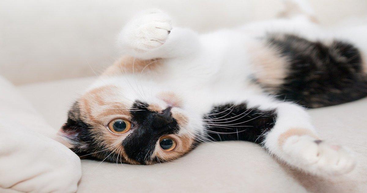 cat pikabumによるPixabayからの画像